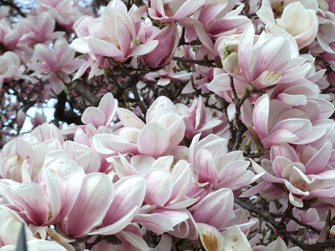 美しい花と花言葉 88.5