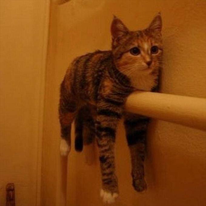 猫おもしろ画像 14