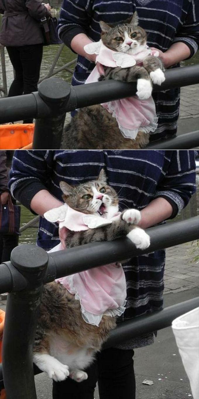 猫おもしろ画像 32