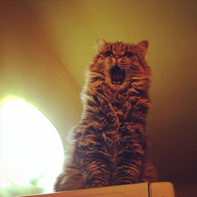 おもしろ猫 17