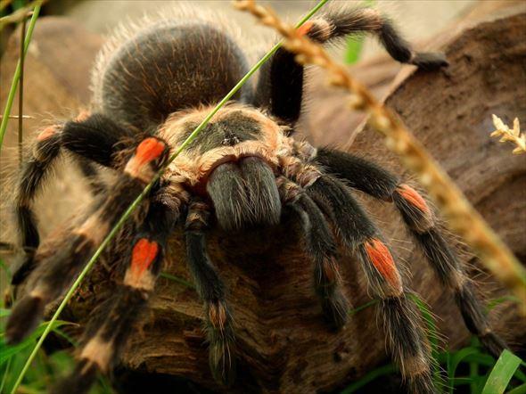蜘蛛画像 33.0
