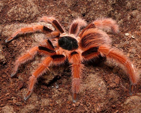 蜘蛛画像 37.0