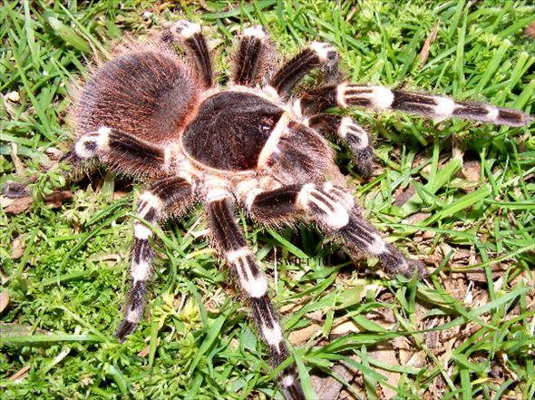 蜘蛛画像 50.1