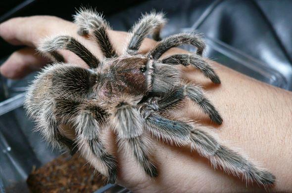 蜘蛛画像 52.1