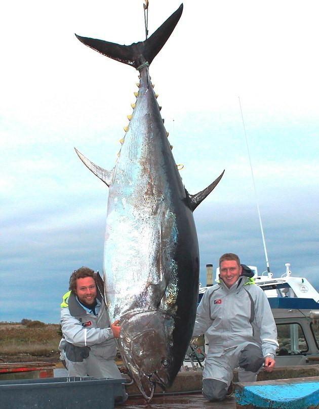 巨大魚 20.0