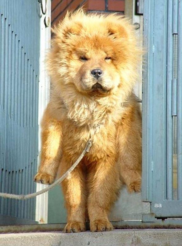 毛がぼさぼさの犬