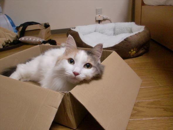 ダンボール猫 26