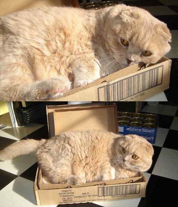 ダンボール猫 50