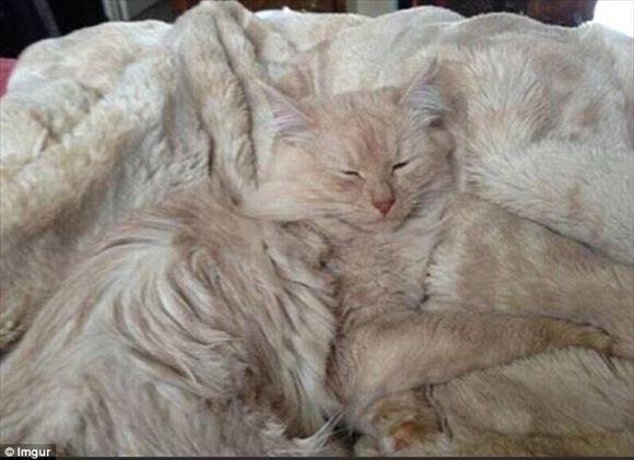 ネコの擬態 51