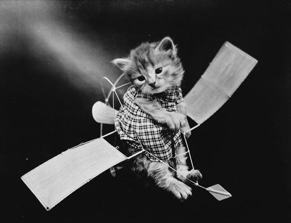 昔の猫の写真。今も昔も変わらない可愛さ(白黒画像)