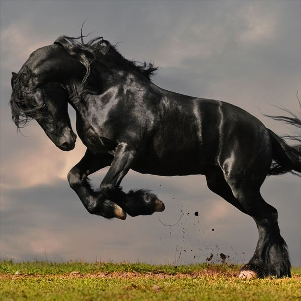地球上で最も美しい動物(ランキングベスト25)