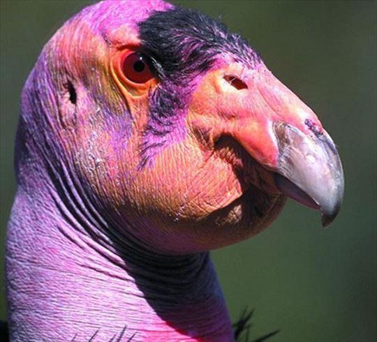地球上のきわめて醜い動物(不気味・ブサイクな生物集)