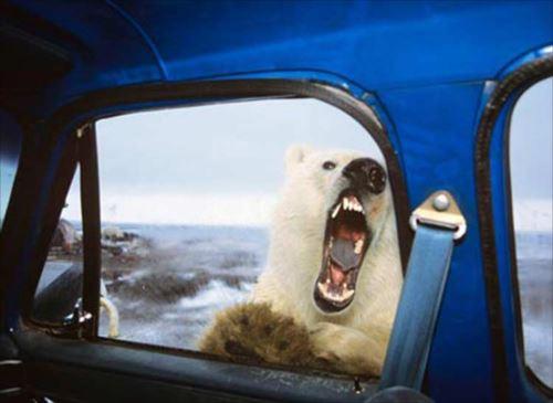 ある意味怖い。知っておきたいクマの雑学