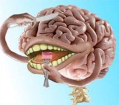 最も脂肪が多い臓器、脳に関する興味深い雑学30選