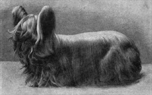 既にこの地球上にいない絶滅した犬種16選