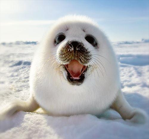 世界で最も可愛い動物・生物(ランキングベスト50)