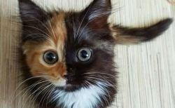 一度は見て欲しい。本当に可愛いイヌとネコの写真60選