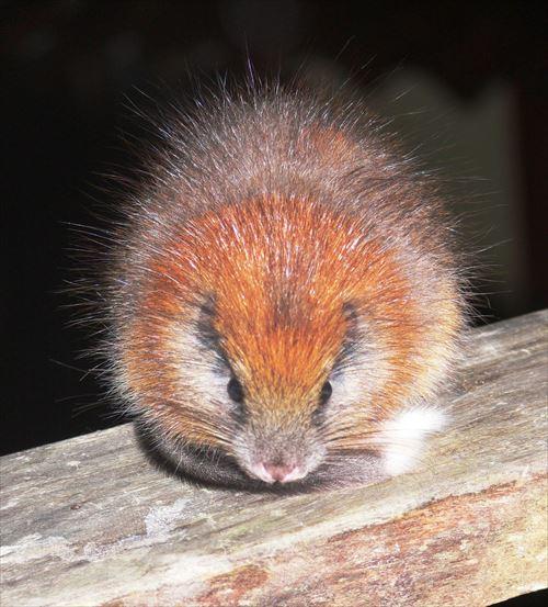 世界に100匹以下しかいない。超レアな絶滅危惧種(動物11種)