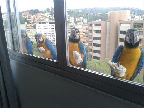 窓の前にやってきた色んな鳥たちにびっくり(写真28枚)