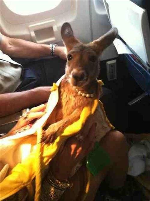 嘘でしょ?飛行機に乗ってたすごい乗客(動物編)