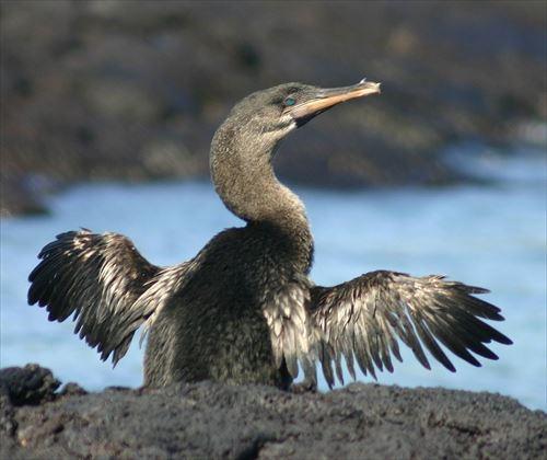 ほとんど知られていない飛べない鳥・10種