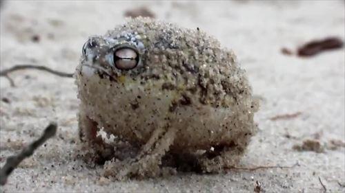 びっくりするほど変わったカエル12種