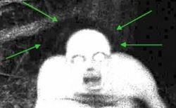 正体が明らかになった謎の生物・6体
