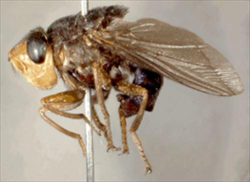 奇妙で恐ろしい昆虫の雑学8つ