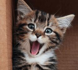 cat smile happy