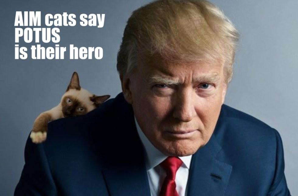 AIM cats trump hero