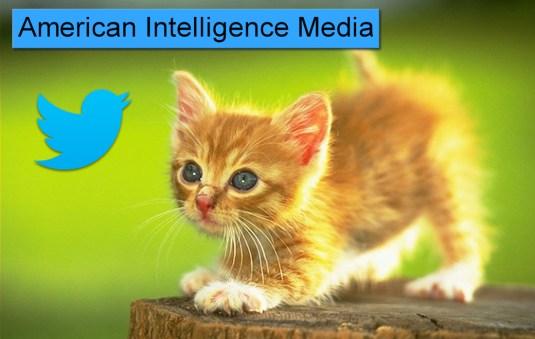 aim_cat_twitter giorgio