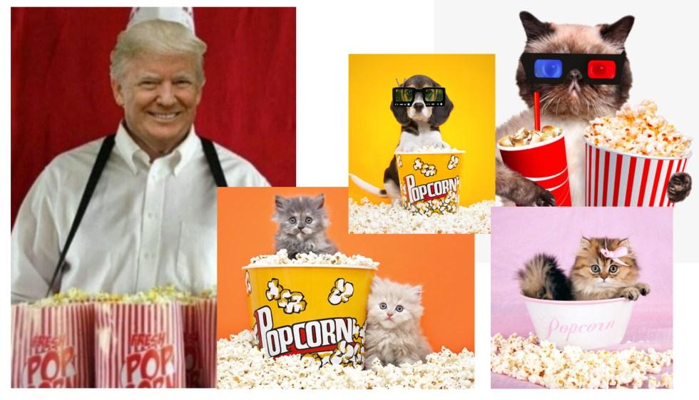 Trump cats and popcorn
