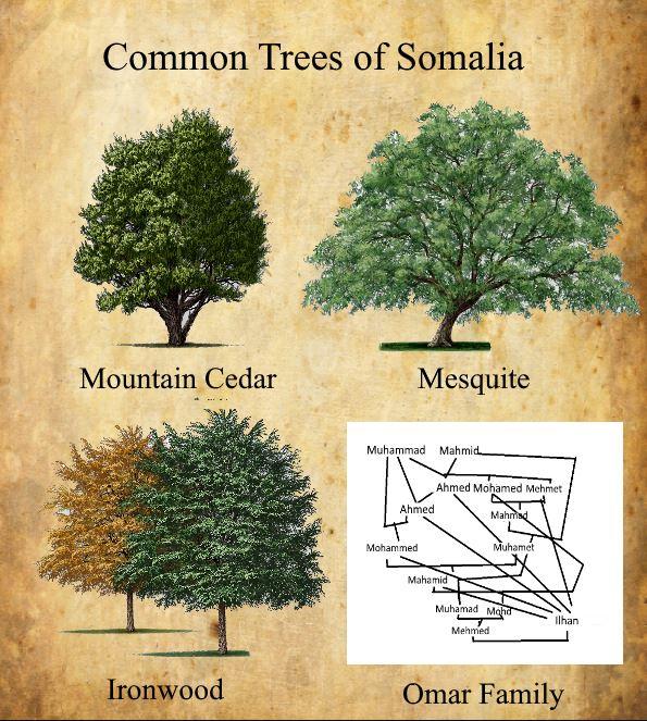omar family tree.JPG