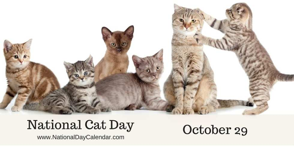 national cat day.jpg