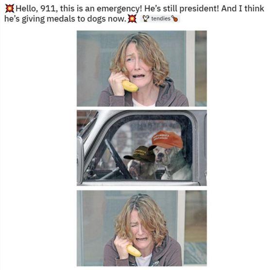 911 dog
