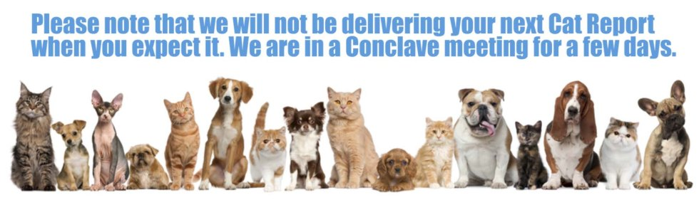 cat dog conclave no cat report.jpg