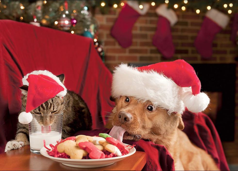 cat dog christmas.JPG