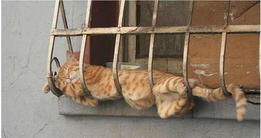 cat sleep on rail.JPG