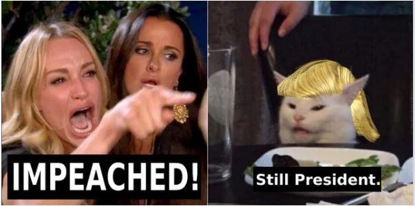 impeach trump cat.JPG