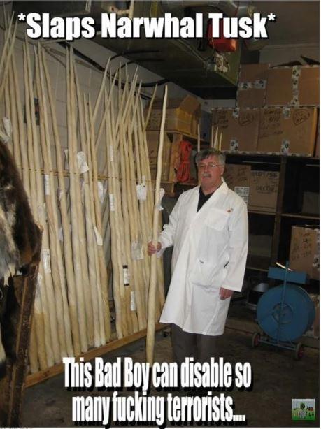 narwhal tusk collection.JPG
