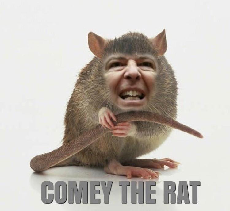 comey rat