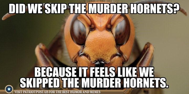 murder hornets