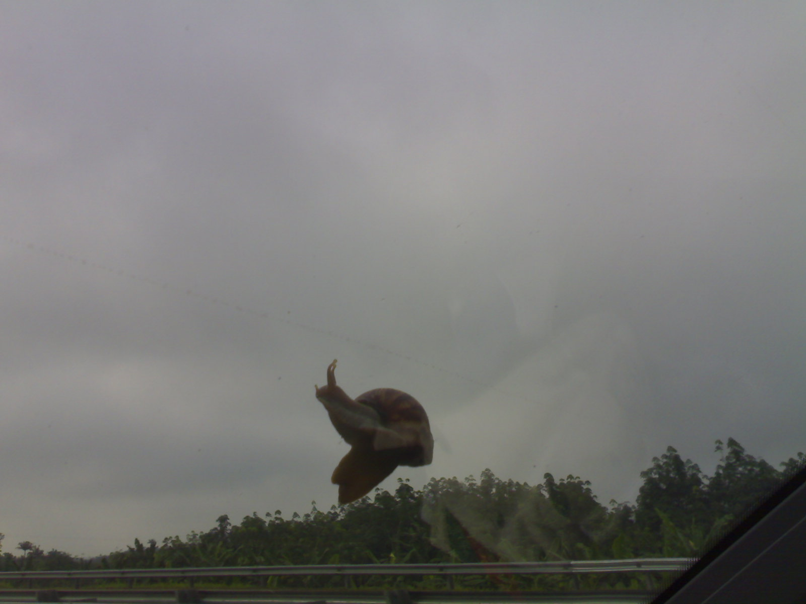 The snail's desire to get a better view drops while his fear of getting blown away suddenly struck it as it glided up the windscreen assisted by the 'kind wind'