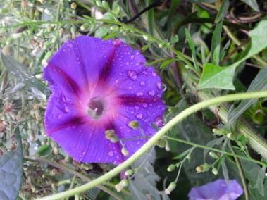 Séchoir solaire - fleurs