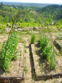 aime-jardinage10-jardins-pluriel-laurac