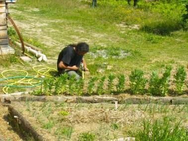 aime-jardinage12-jardins-pluriel-laurac