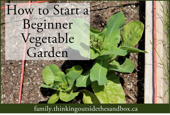 How to Start a Beginner Vegetable Garden