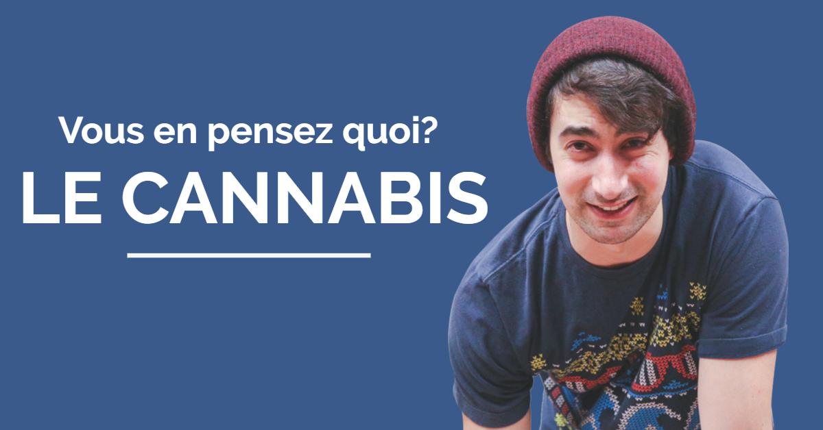 Le Cannabis en Bref