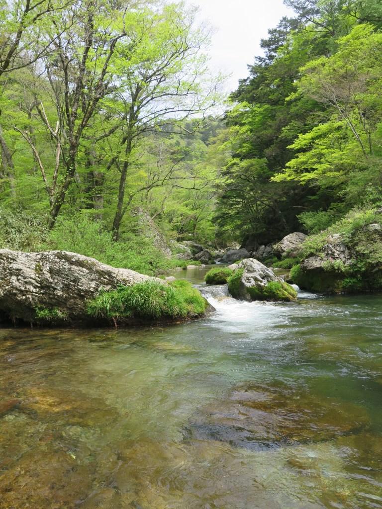 新緑過ぎる小田深山渓谷(愛媛県内子町)を散策。