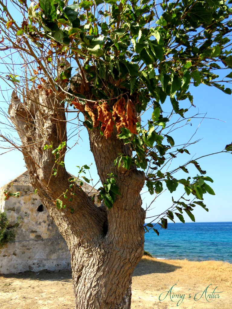 Tree in Tsilivi